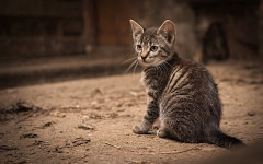 Mi gato me muerde: ¿juego o desafío? Causas y soluciones