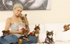 Paris Hilton and Her Very Lucky Toy Pups