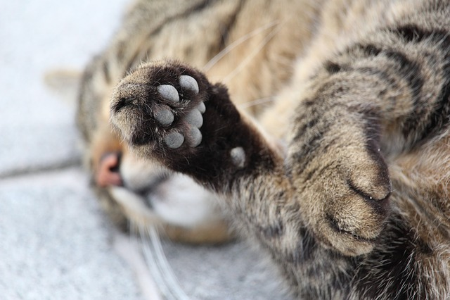 Declawing cats: should you do it? Let's find out!