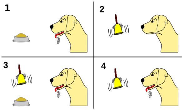 El perro de Pavlov: ¿lo has escuchado?