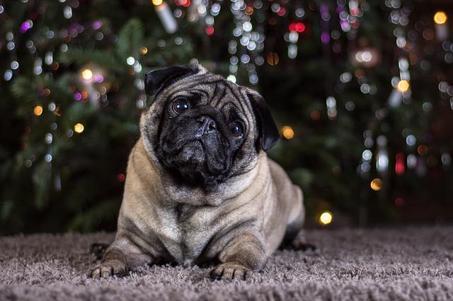 Capire il cane: sai comprendere i comportamenti di Fido?