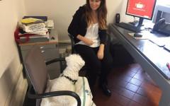 Cani in comune a Genova