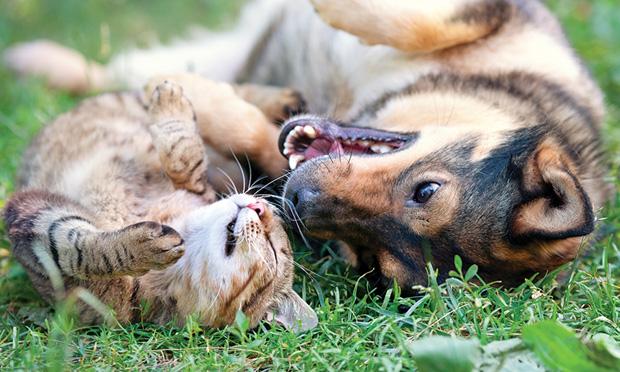 Diabete Mellito del cane e del gatto: domande e risposte