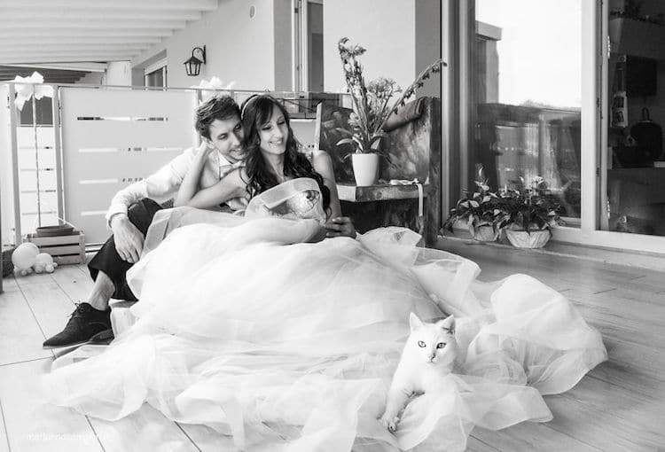 Gatti e spose: quando i felini sono protagonisti ai matrimoni