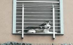 Cane rinchiuso sul balcone: foto denuncia sui social