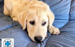 Ares cerca casa, aiutiamolo: appello per adozione