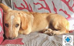Ermes cerca casa, aiutiamolo: appello per adozione