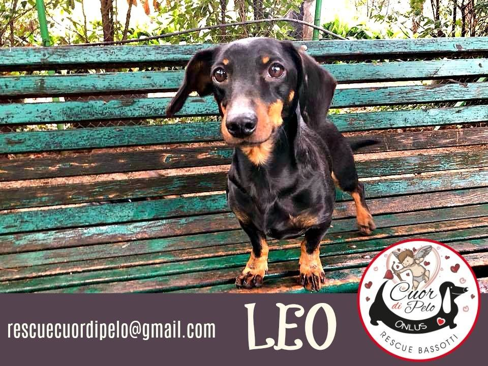 Leo cerca casa, aiutiamolo: appello per adozione