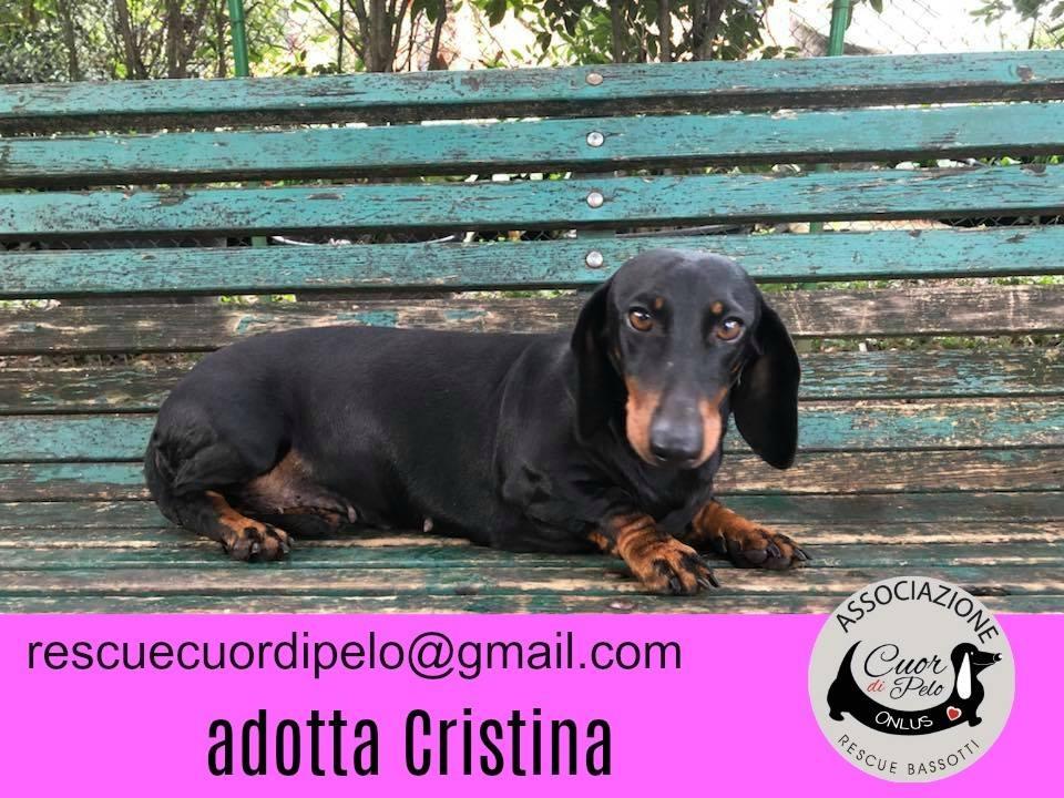 Cristina cerca casa: appello per adozione