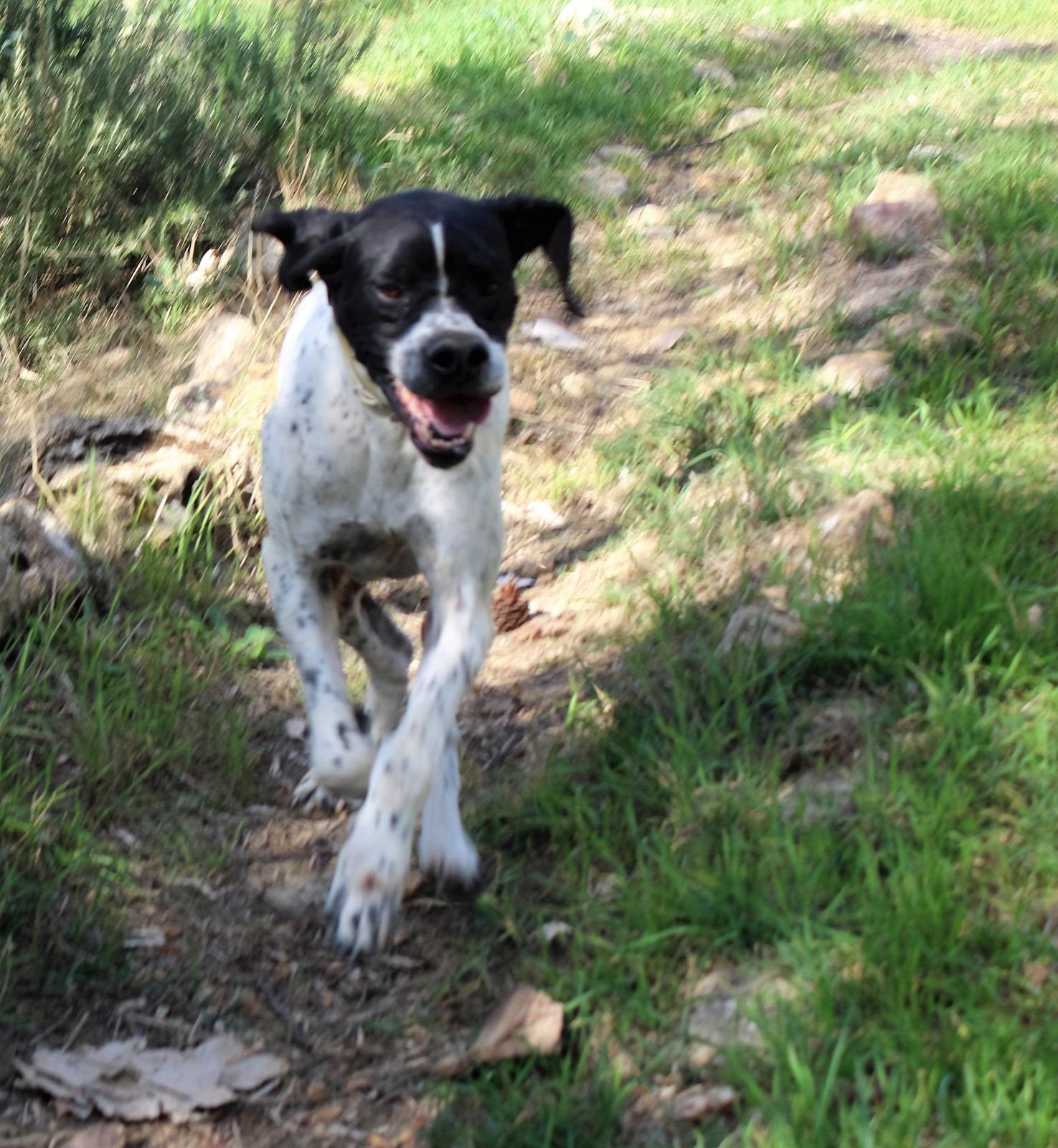 Pingo cerca casa: appello per adozione