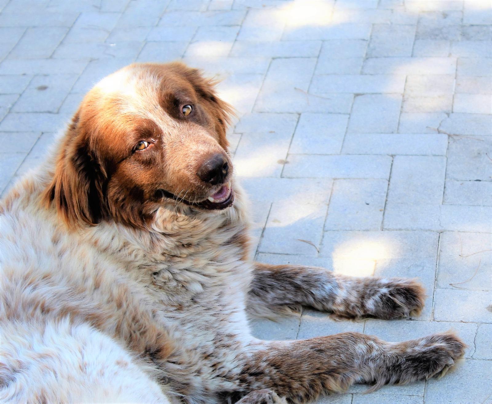 Bruno cerca casa: appello per adozioni