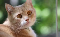 Gatto con bava alla bocca: cause e terapie