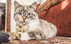 Suoni del gatto: i 6 suoni con cui i gatti comunicano