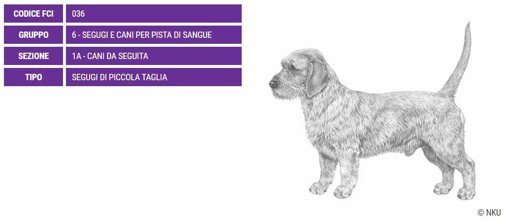 Basset Fauve De Bretagne, carattere e prezzo - Razze cani