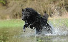 Cani e acqua: amano il mare ma odiano il bagnetto. Perché?