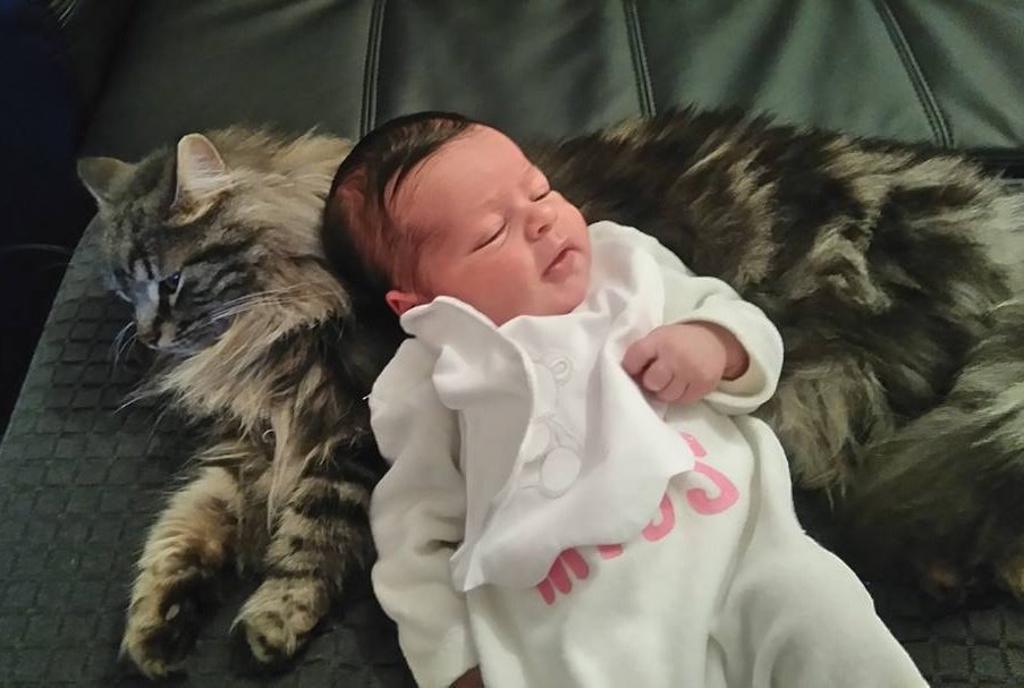Gatto protegge bambina: la bellissima storia di Tiger