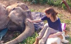 Cane accanto a elefantessa: amici fino alla fine