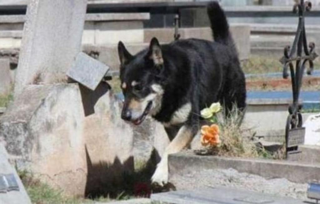 Addio Capitan: il cane vegliava la tomba del suo umano