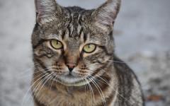 Condanna da record per aver preso un gatto a bastonate