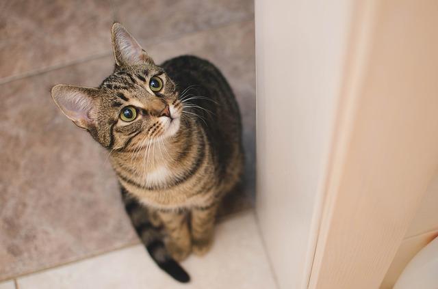 Gatto si sente solo? Ecco come capirlo e cosa fare