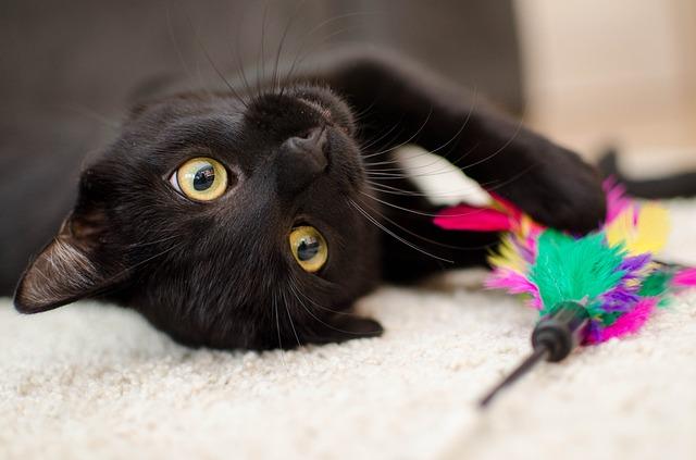 Curiosidades de los gatos: un animal singular