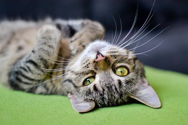 Cosa pensano i gatti degli uomini? Ecco la risposta