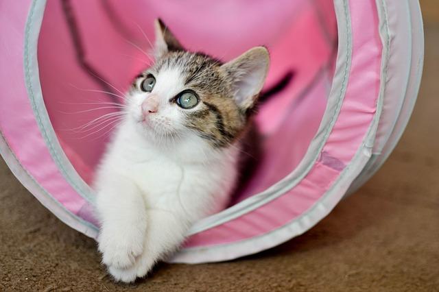 Età del gatto: a quanto corrisponde un anno felino?
