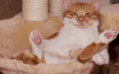 Abitudini del gatto: i nostri mici ci fanno i dispetti?
