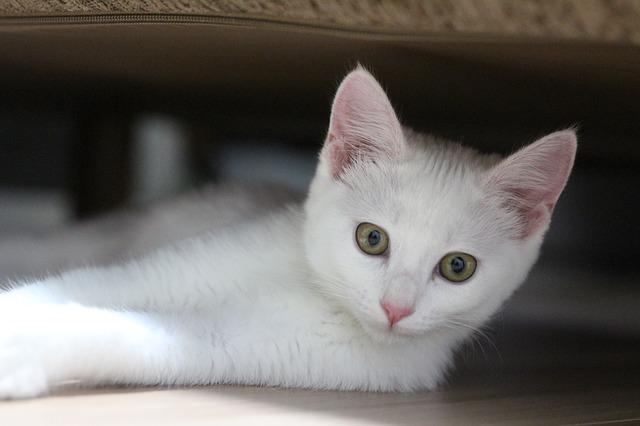 Gatti sono attratti da chi li evita, perché?