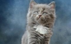 Día internacional del gato: una fecha para nuestra mascota