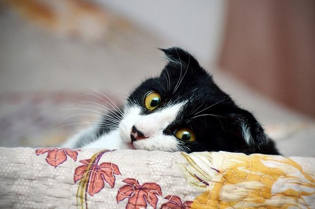 Gif gato, toda una tendencia para las redes