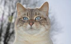 Comunicare con il gatto: ecco come si esprime con le orecchie