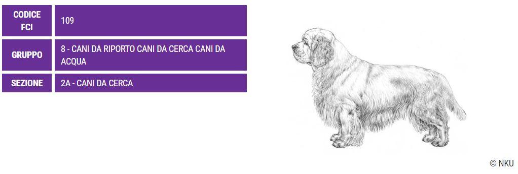 Clumber Spaniel, carattere e prezzo - Razze cani