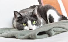 Problemi movimento gatti: le cause e le terapie