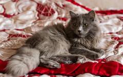 Abitudini del gatto: cosa fa il mio gatto quando è in casa solo