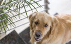 Fischietto per cani: cos'è e a cosa serve