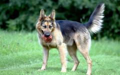 Cosa comunica il cane con la coda? Scopriamolo!