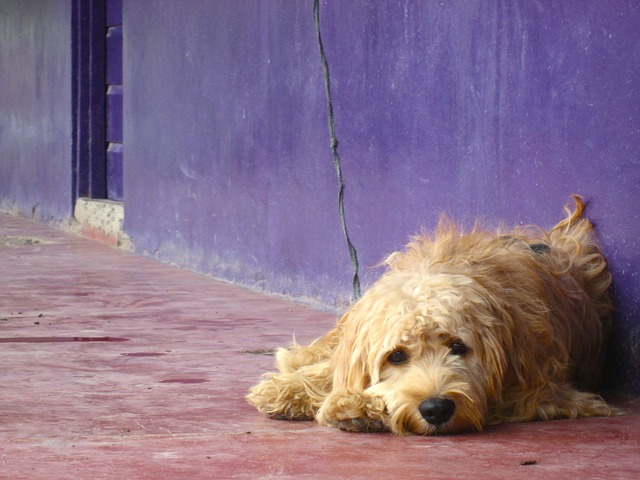 Cane abbandonato lasciato nel vecchio appartamento