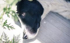 Uccide cane con balestra: condannato a 10 mesi