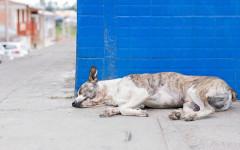 Strage di cani a Sciacca: cani ingiustamente avvelenati