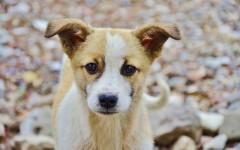 Mi perro se rasca mucho: ¿qué puedo hacer?