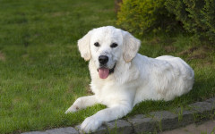 Cani fiutano malattie: quali e in che modo?