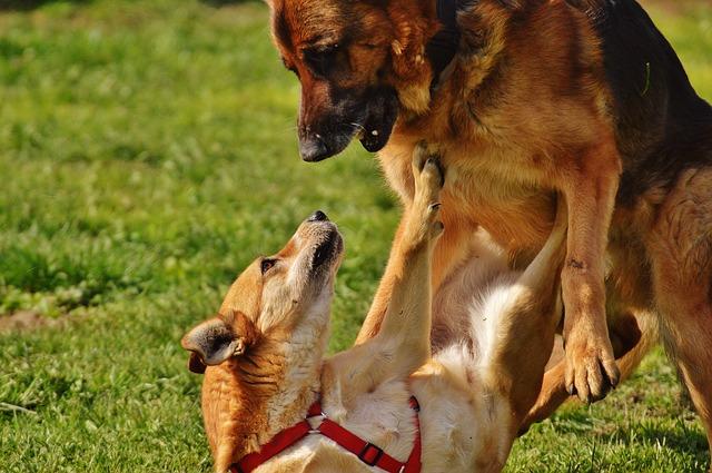 Aggressività tra cani: quali sono le cause? Come evitarla?