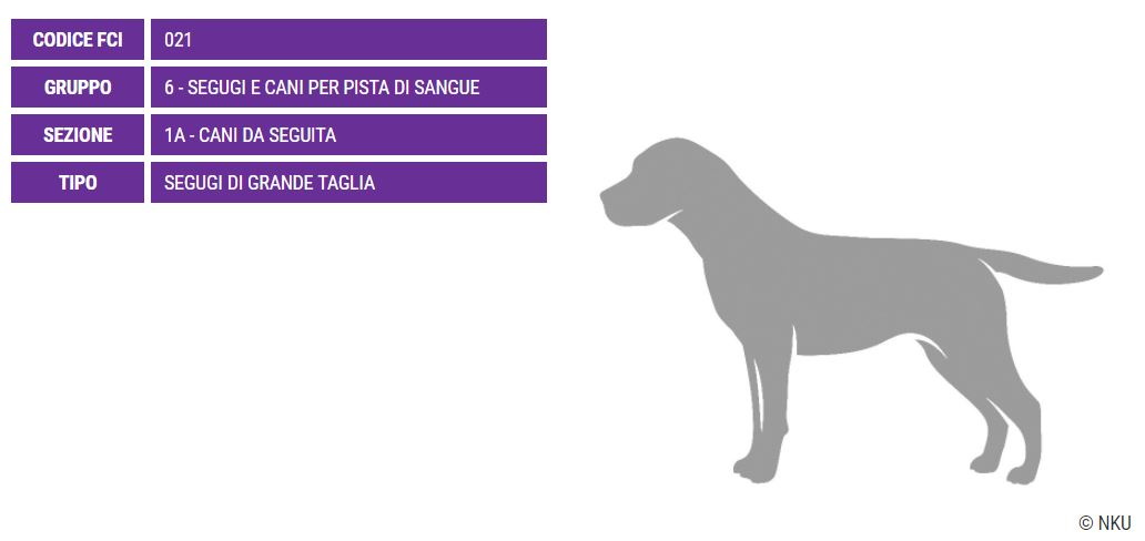 Gascon Saintongeois, carattere e prezzo - Razze cani