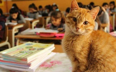 Gatto a scuola: il felino Tombi torna finalmente in classe