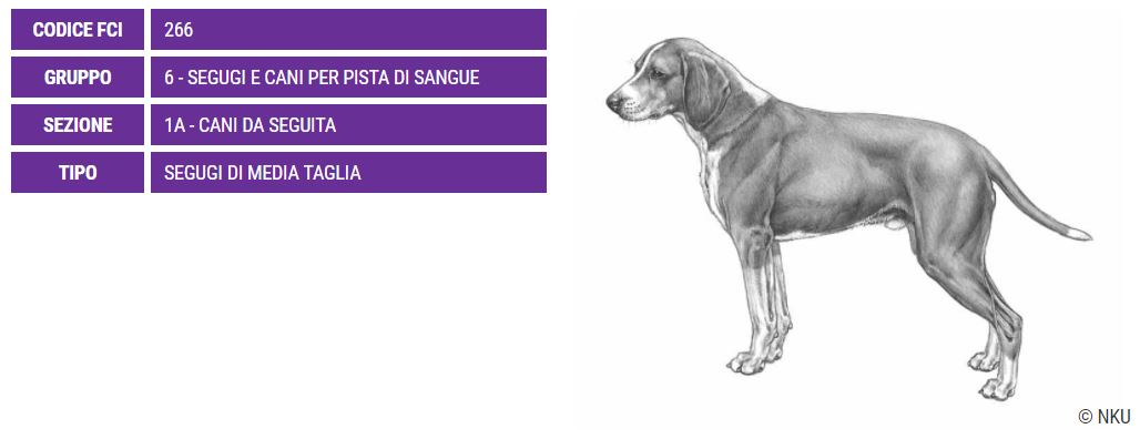 Hygenhund, carattere e prezzo - Razze cani