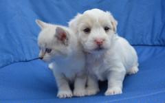 Cani e gatti curano Alzheimer in provincia di Mantova