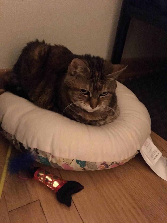 Gatto adottato a 13 anni: la storia a lieto fine di Moxie
