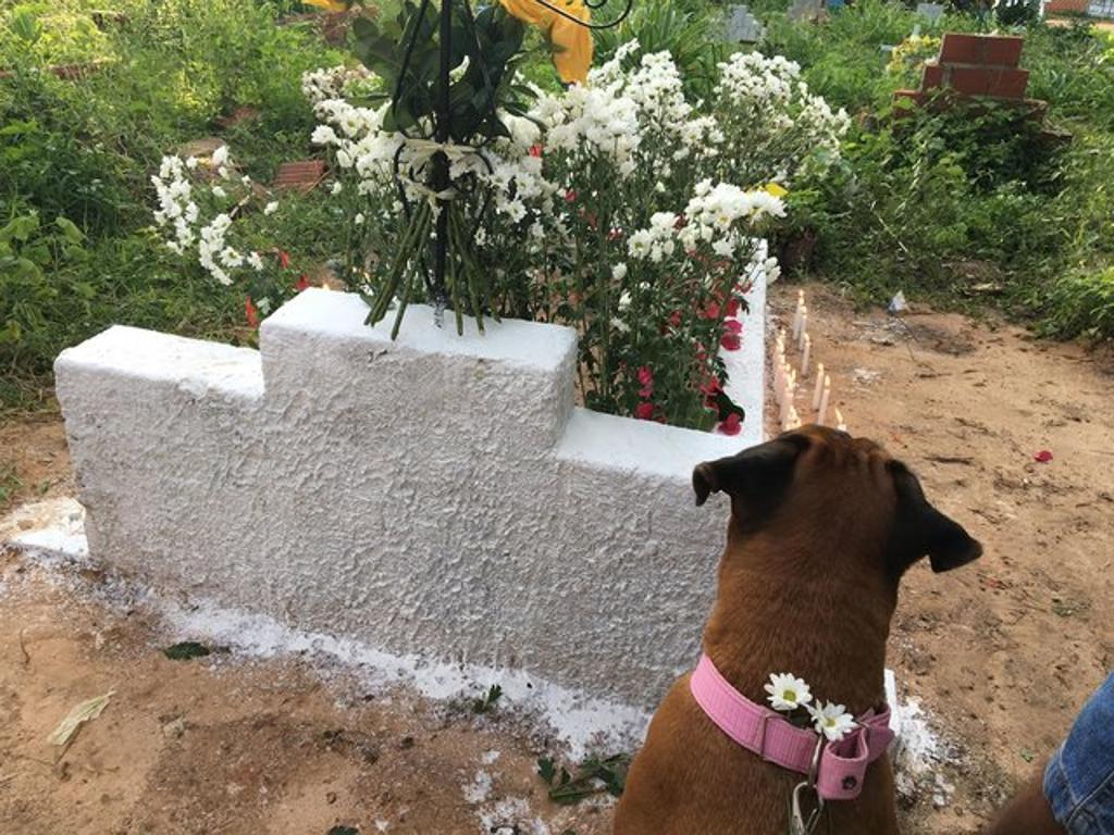 Cane piange alla veglia per la sua umana