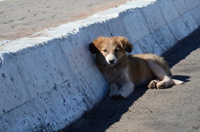 Russia 2018: cani e gatti randagi a rischio uccisione